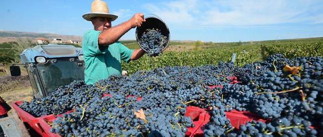 Viticulteur en Roumanie