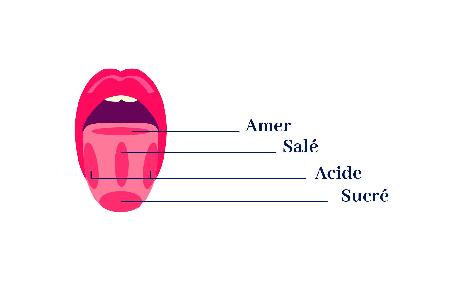 les zones qui captent l'amer, le salé, l'acide et le sucré sur une langue