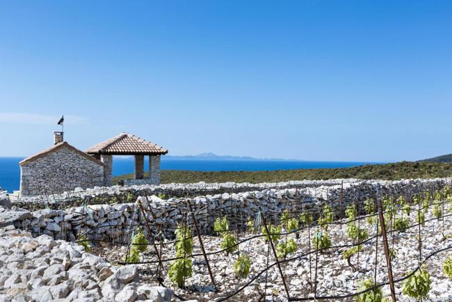 Tour des vins d'Europe : le vin Croate