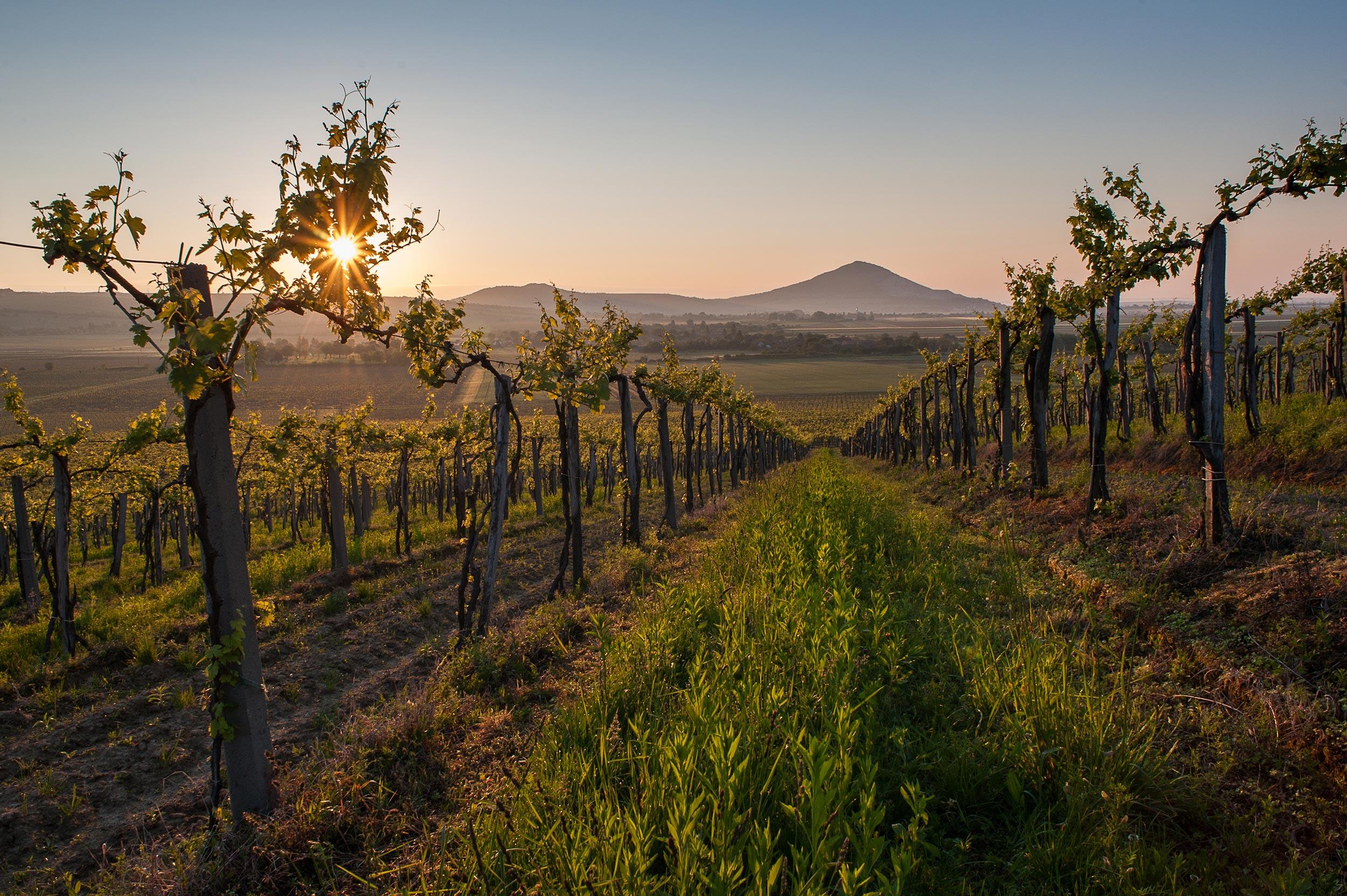 Tour des vins d'Europe : le vin Slovaque