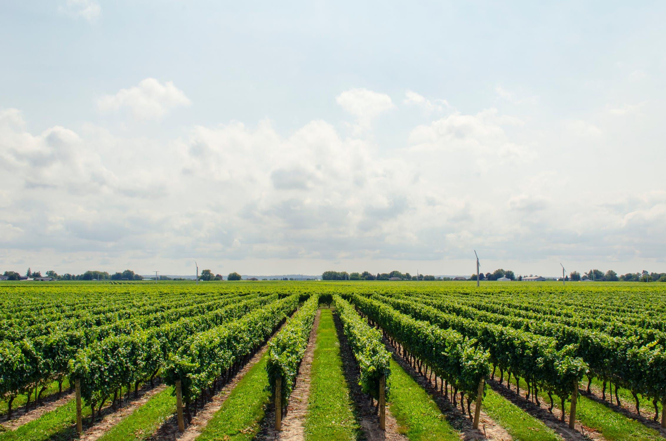 Musées sur le vin : Paris Wine Day Tours