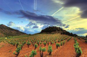 Le Manchuela Tinto : un vin rouge de la région viticole Castilla-La Mancha