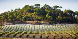 Les prestigieux vins de la Ribera del Duero : le domaine de la Vega Sicilia