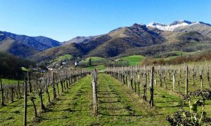 Txakoli: the emblematic wine of the Spanish Basque Country