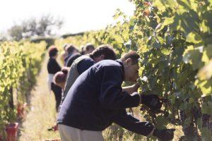 Tonkovic Winery