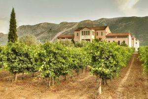 Saint George Nemea winery