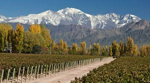 vignoble en Argentine avec les Andes en arrière plan