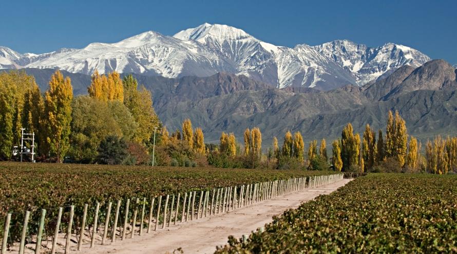 Vignoble Argentin au pied de la Cordière des Andes