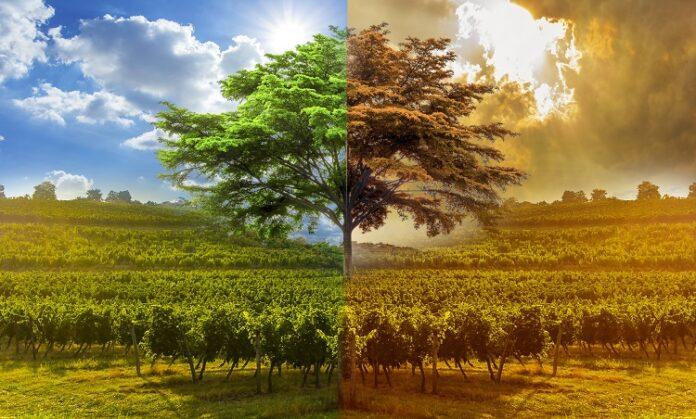 Changement climatique et vin