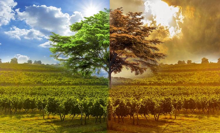 Réchauffement climatique et vin