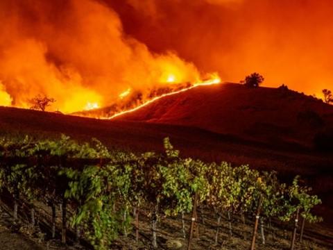 Incendie dans les vignes de la Napa Valley