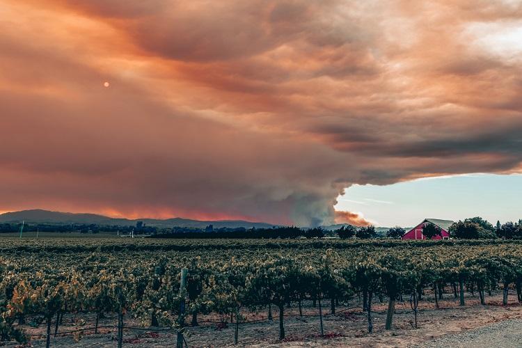 Le monde du vin victime des incendies