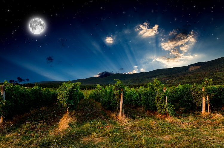 Influence of the lunar cycles on the wine culture