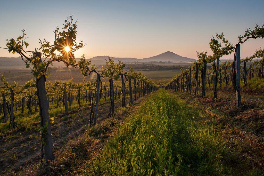Europe's wines: Slovakia