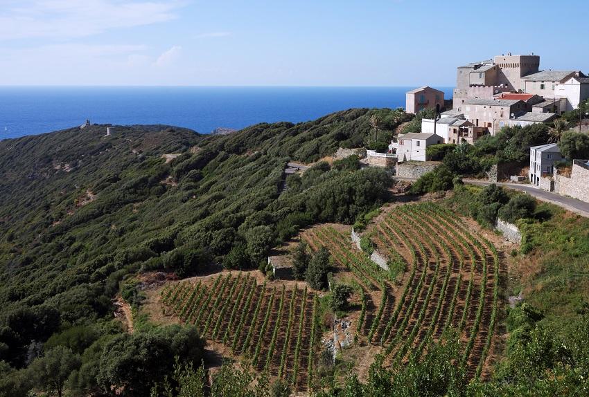 Tour de France régions viticoles - Cap Corse