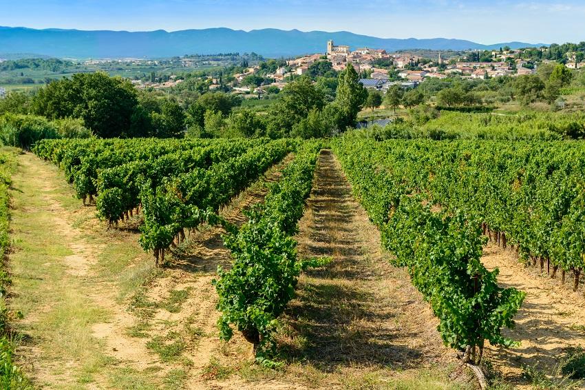 Tour de France régions viticoles - Languedoc