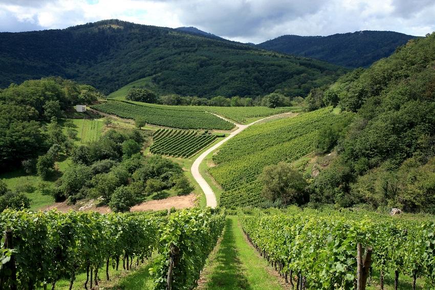 Tour de France régions viticoles - Alsace route des vins