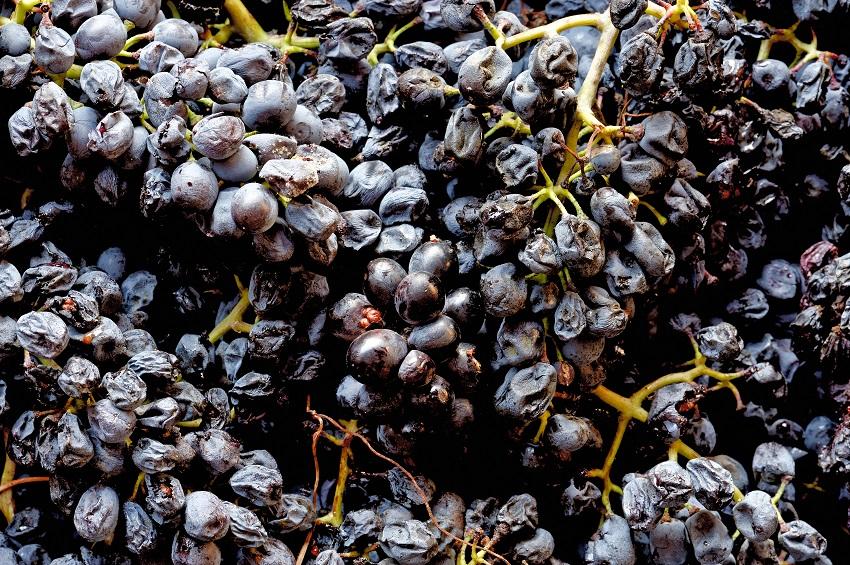 Late harvest: Passito